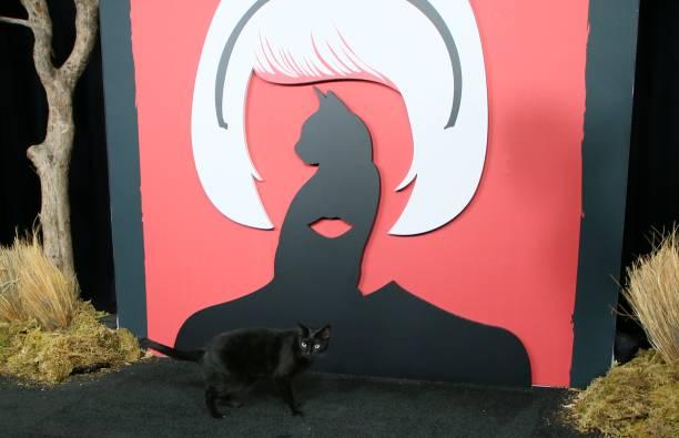 Salem marca presença na premiere da série O Mundo Sombrio de Sabrina