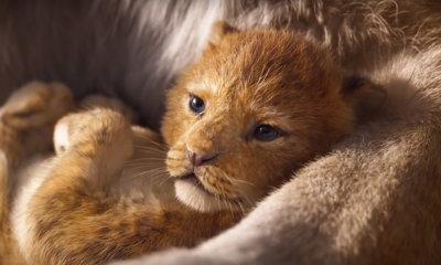 O Rei Leão   Disney libera o primeiro teaser trailer do live-action. Confira!